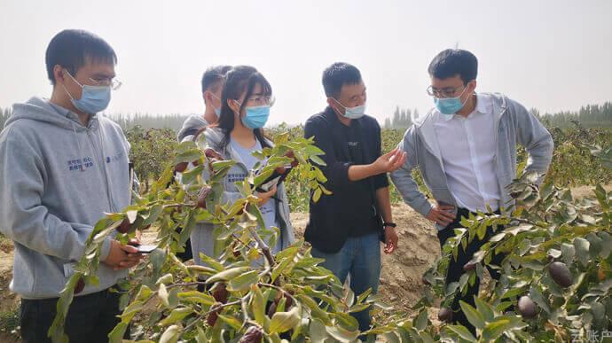 2020年10月,云账户团队调研新疆和田地区大枣种植情况。