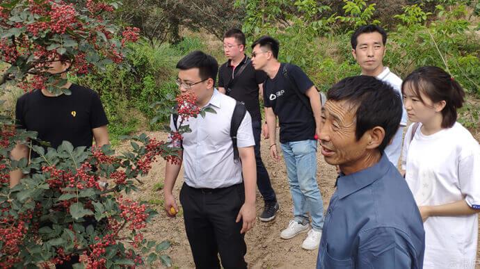 2019年7月,云账户团队调研甘肃省天水市麦积区五龙镇谢家咀村支柱产业花椒种植情况,探索以特色产业支持乡村振兴。