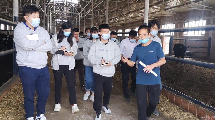 2020年10月,云账户团队调研新疆和田地区奶牛养殖情况。
